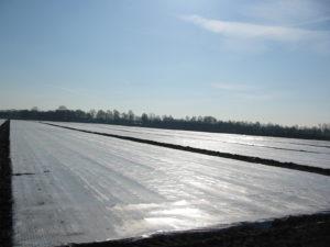 oogstvervroegingsfolie